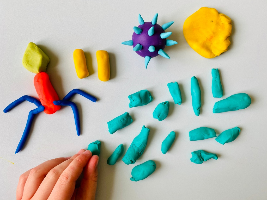 Making viruses and bacteria with playdoh
