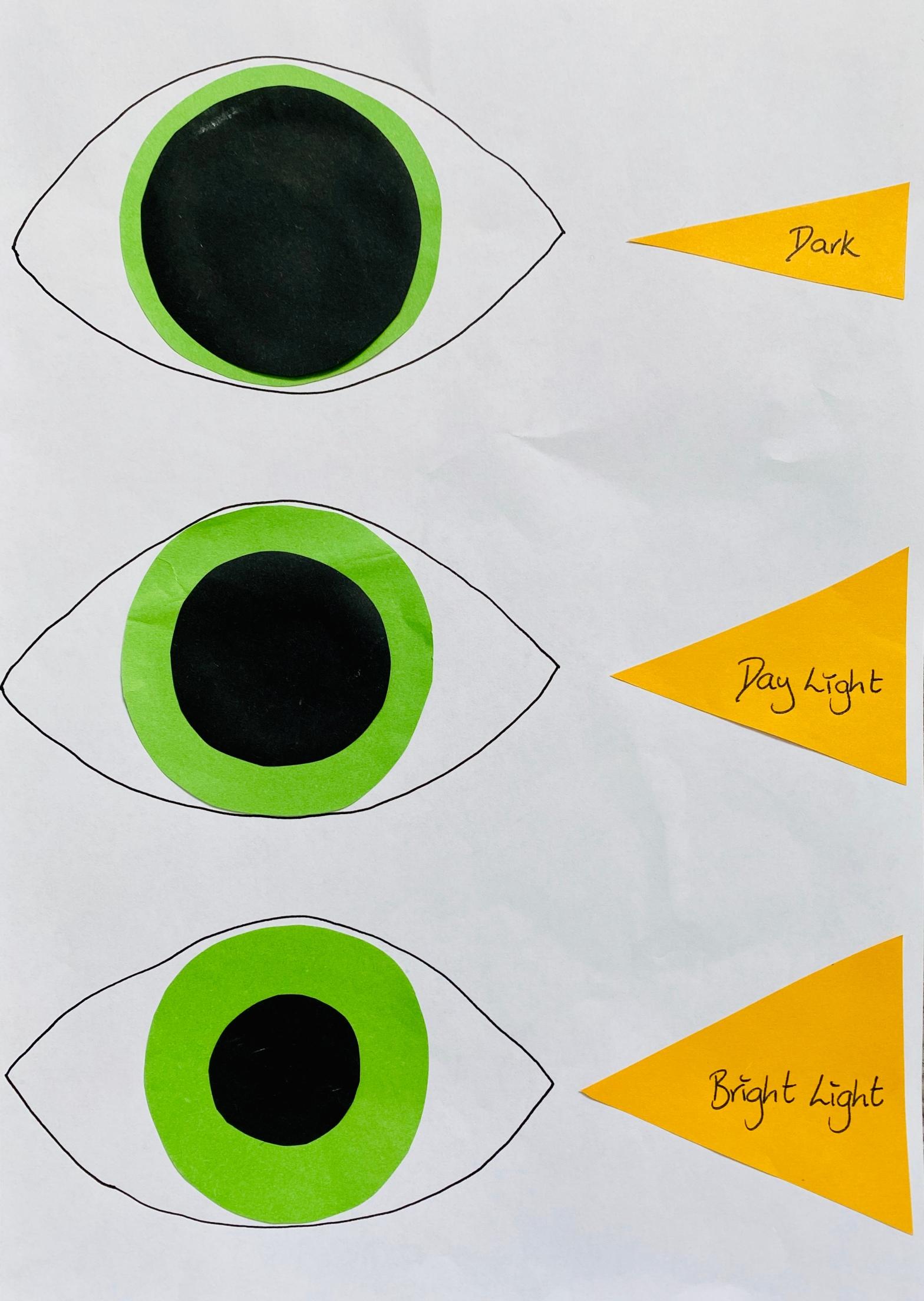 Eye experiment
