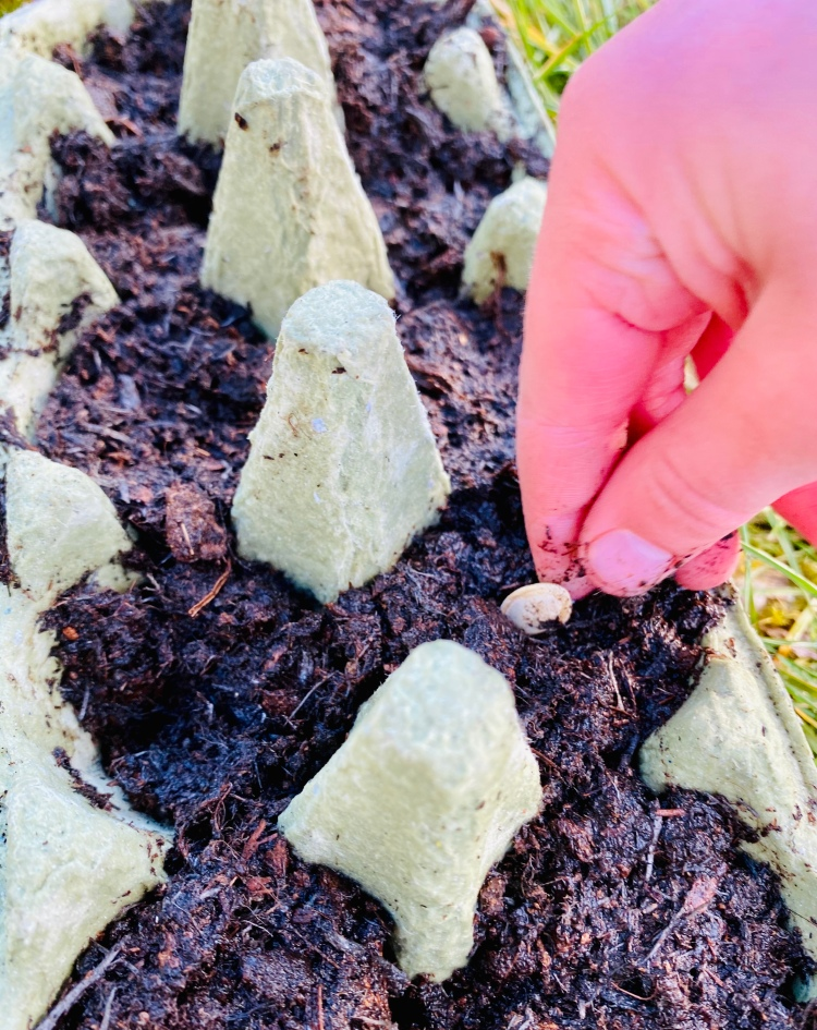 Planting seeds with kids (using homemade resources like recycled egg cartons)