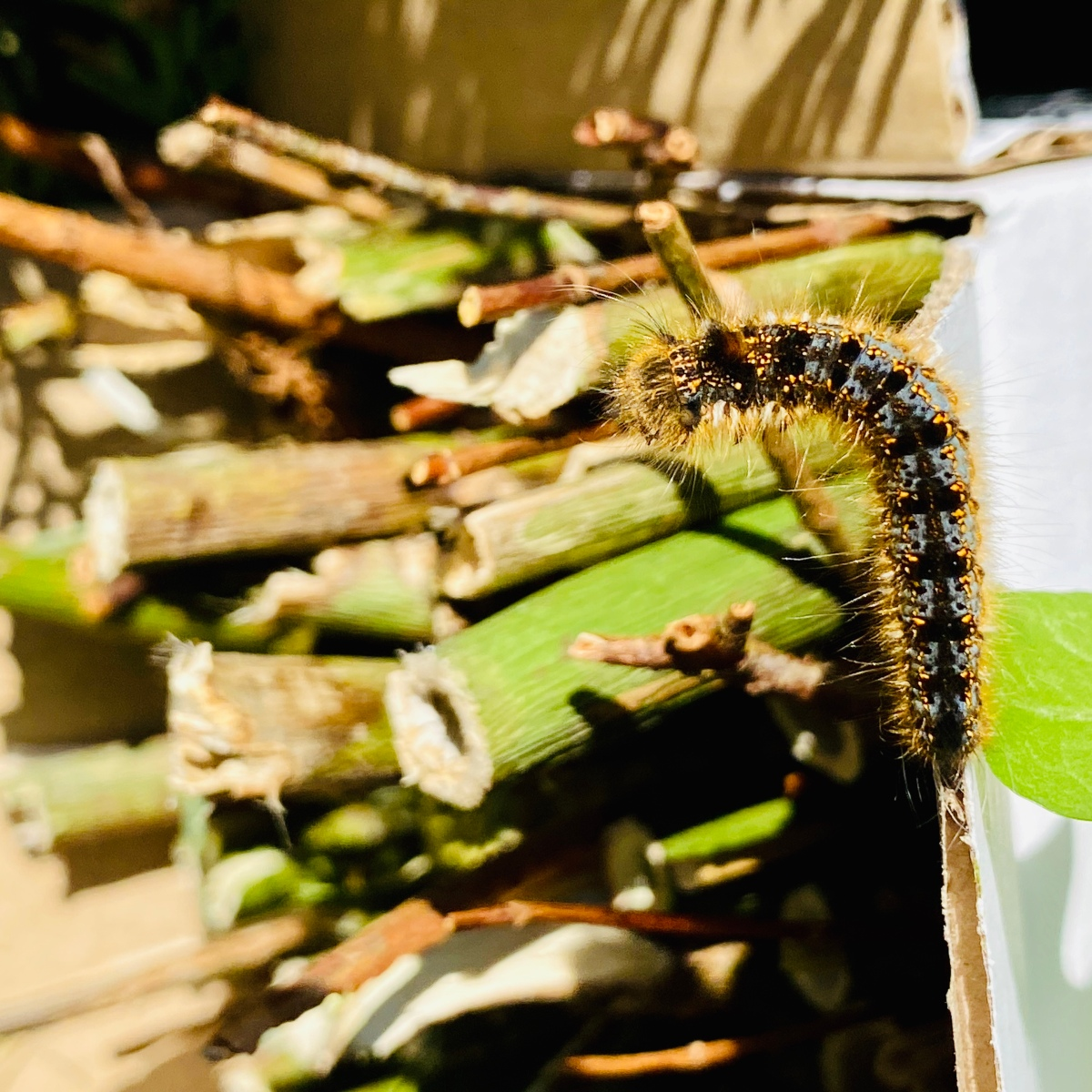 Caterpillar crawling into a bug hotel